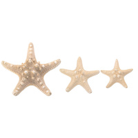 5pce Horn Starfish Bleached White Nautical Theme with Beach Look