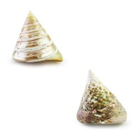6cm Real Pyramid Shell, Two Exquisite Designs, Very Exotic, Beach Theme
