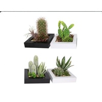 1pce 20x20cm Cactus Bonsai Garden,  Succulents, With Pebbles, Australian Made