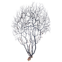 1pce 28cm - 35cm Sea Fan /Fern for Shadow Boxes or Creating Amazing Wall Art