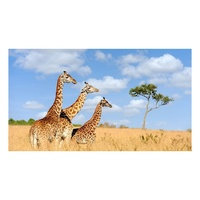 African Giraffe - Paint by Numbers Canvas Art Work DIY 40cm x 50cm
