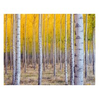 Autumn Trees Yellow Diamond Art Painting Kit Set DIY 40cm x 50cm