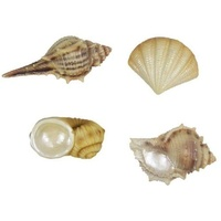 4pce x 6cm Shells. 4 Assorted. Made From Resin. Beach House Decor.Nautical Theme