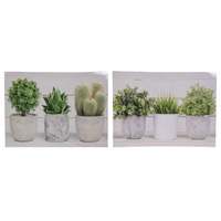 New 1pce 40x30cm Potted Pant Canvas Print Hamptons Style Two Assorted